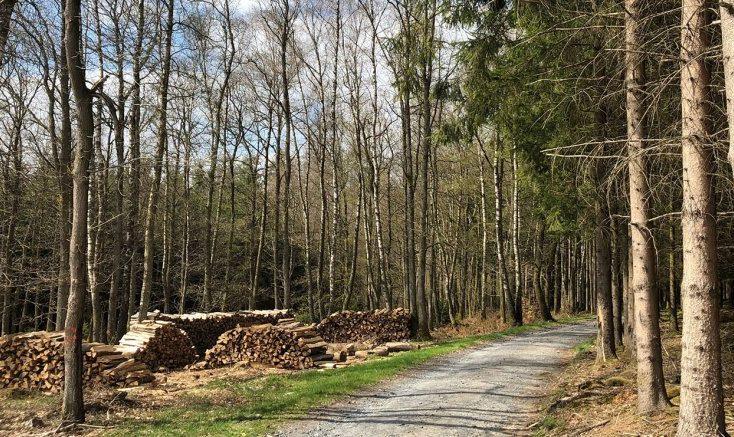 Wandeling in Bertogne Ardennen